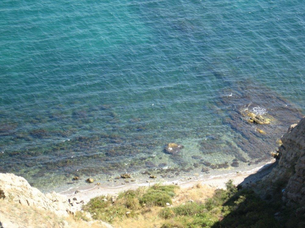 дома новые фото дикий пляж картинки тегом цветущее